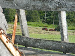 photos from the farm
